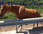korsika-19-tag51601